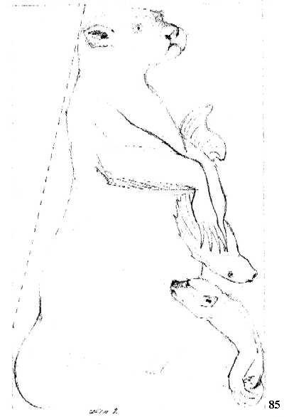 tekening otter