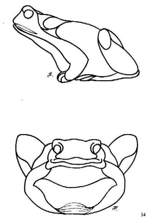tekening kikker